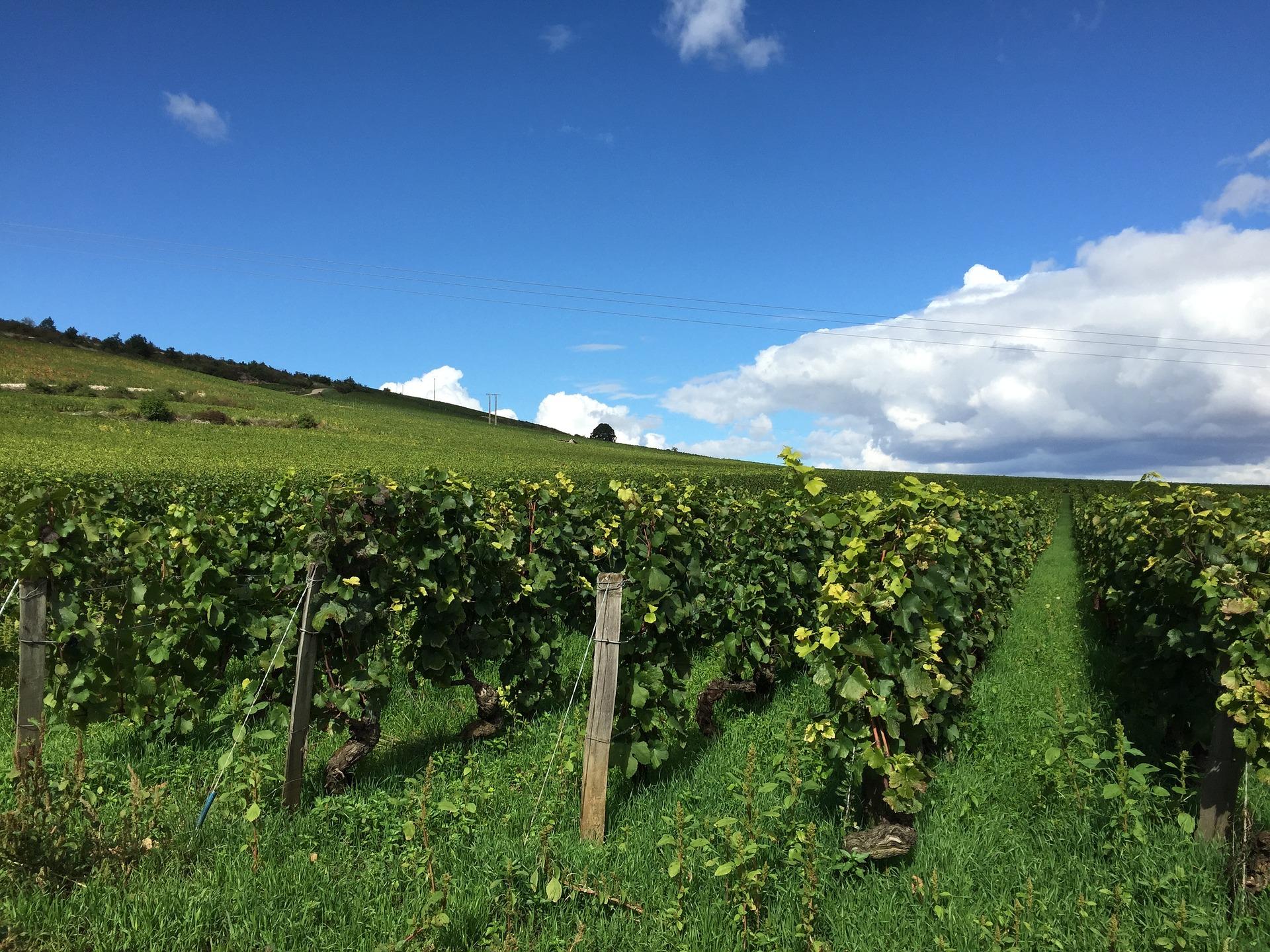 샤블리 와이너리 (Chablis Winery)